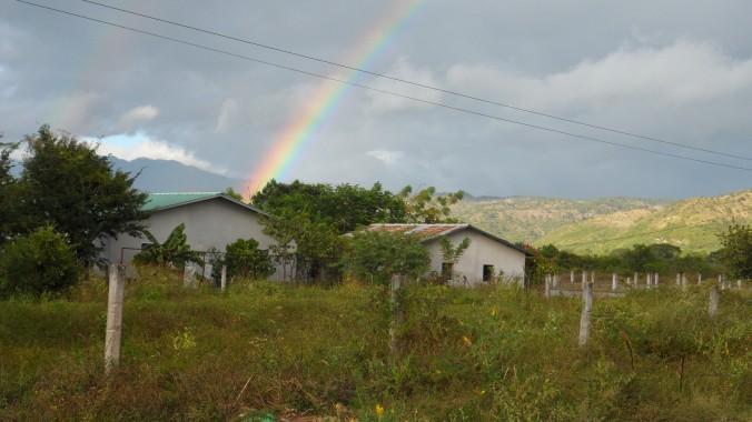 Honduran Rainbow